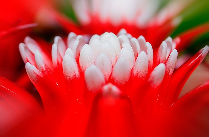 Planta para la Artritis
