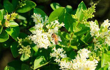 abeja en flores