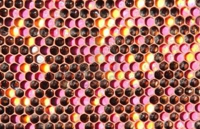 polenes.123rfcom